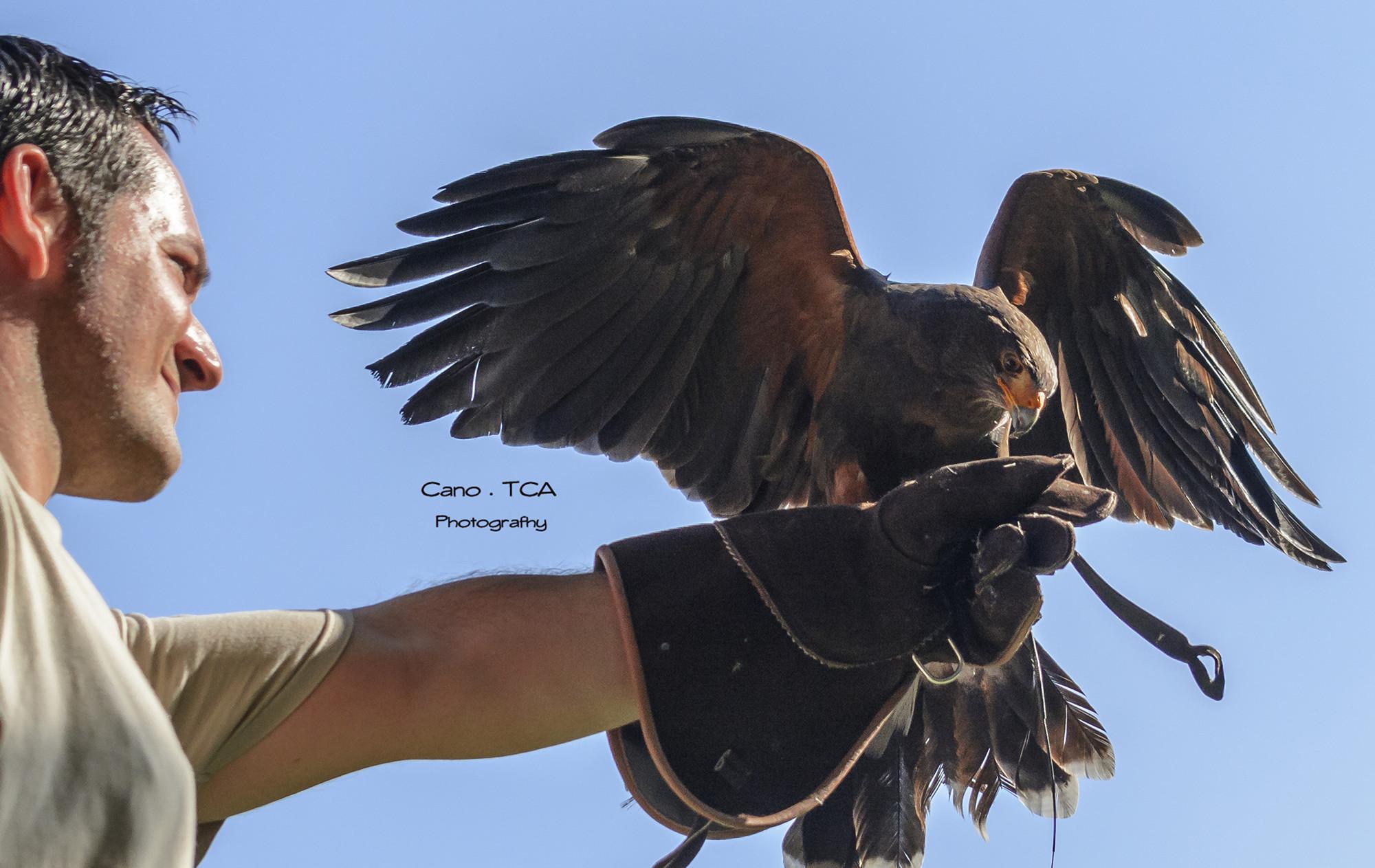 Falcons del Fai